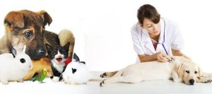 Operar a tu perro es algo poco común y agradable